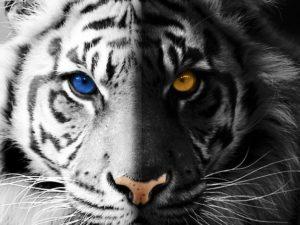 klatwa-tygrysa-ren-i-kshan